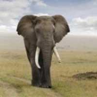 COMMENT REALISER SES REVES EN MANGEANT UN ELEPHANT